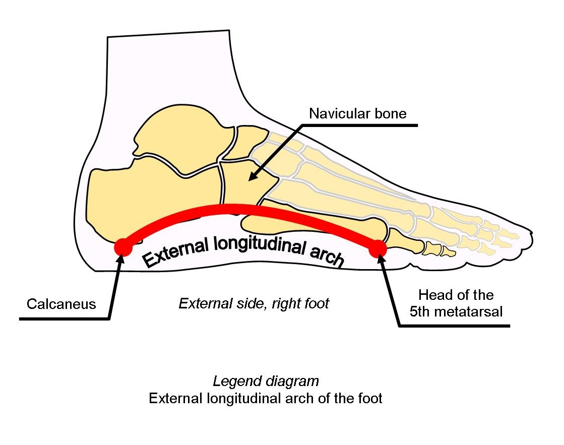 diagram external longitudinal arch of the foot