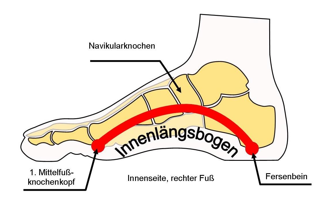 Schema Innenlängsbogen des Fußes