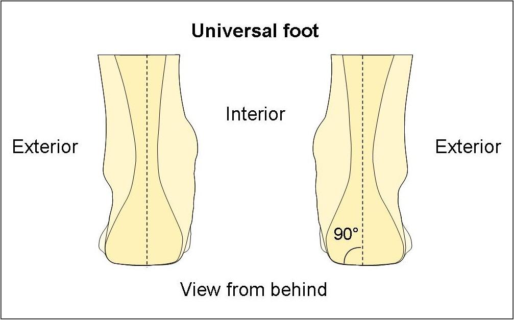 Universal foot