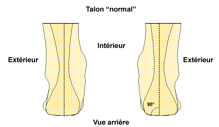 Schema Talon Normal